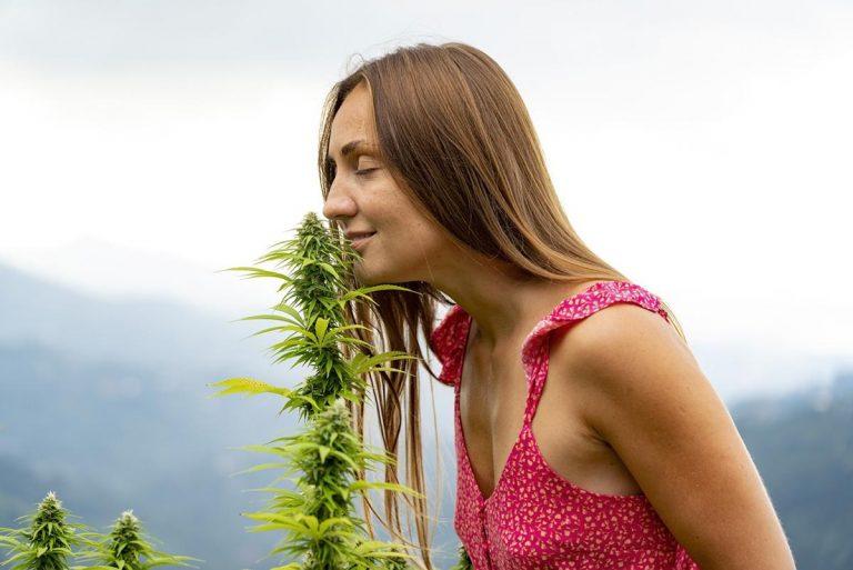 Dobre akcesoria do uprawy marihuany